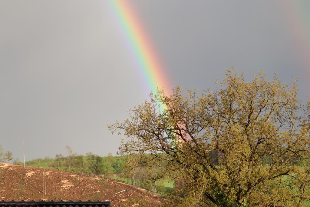 Regenbogen Foto © Artur Jedig