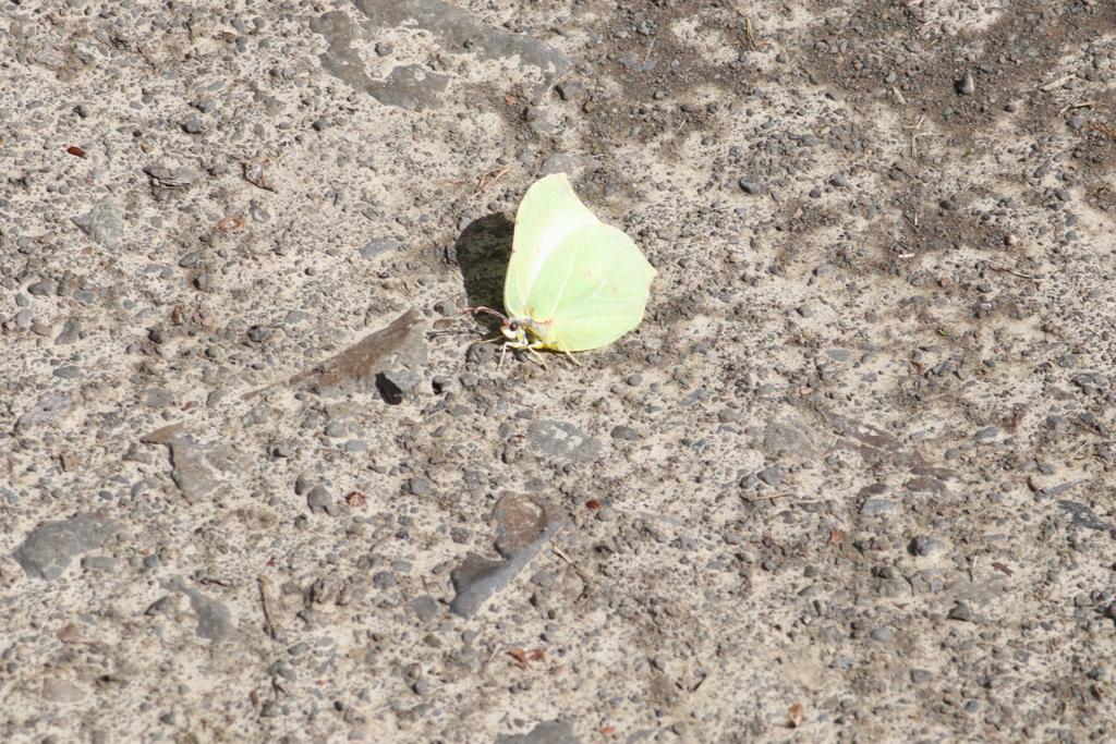 Schmetterling Foto © Artur Jedig