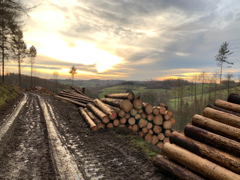 Waldimpressionen - Foto ©Artur Jedig